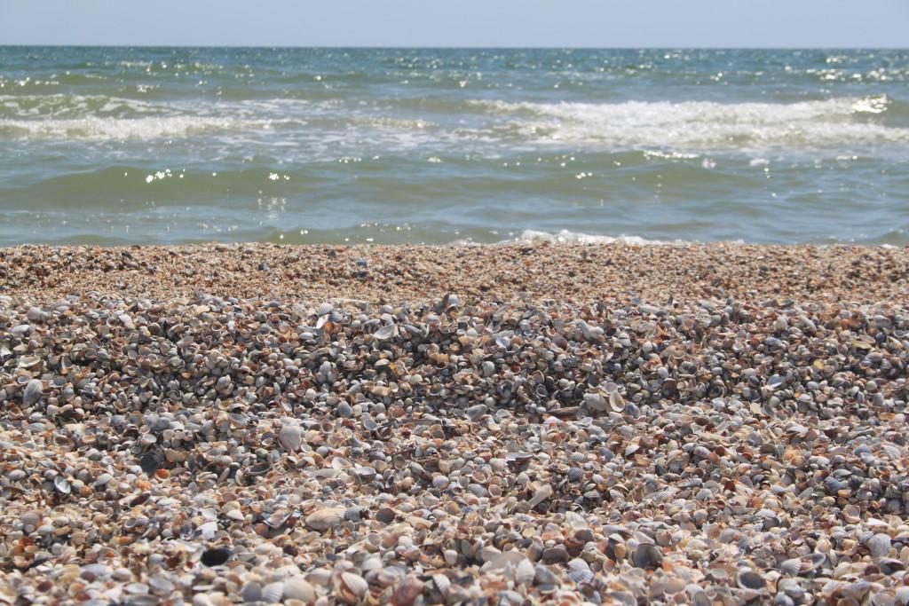 море, ракушка